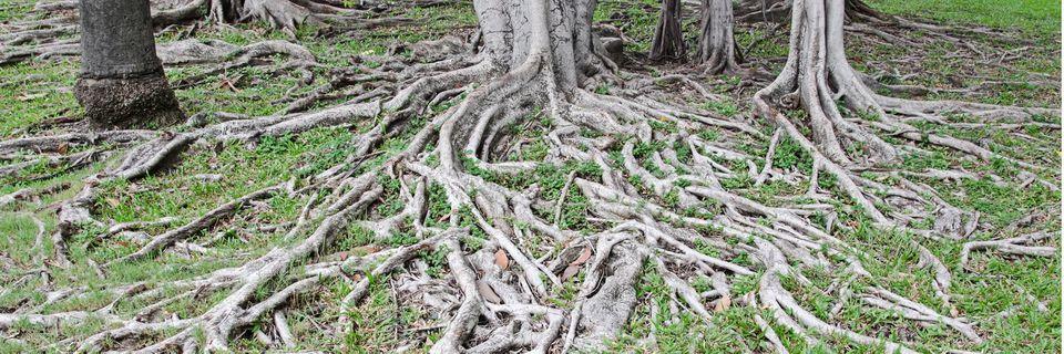 Machinaal grond tussen wortels wegzuigen t.b.v. leiding tracé scheelt veel werk en kosten