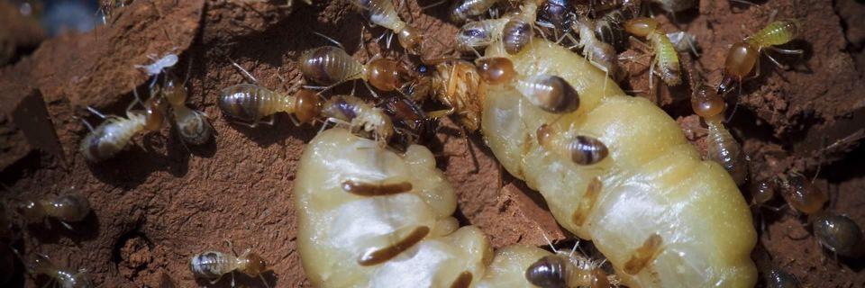 Vocht en koude trekt insecten, ongedierte aan en zorgt voor ontwikkeling van schimmels en zwammen  wat zorgt voor rottingsprocessen waardoor stank in de kruipruimte kan ontstaan.