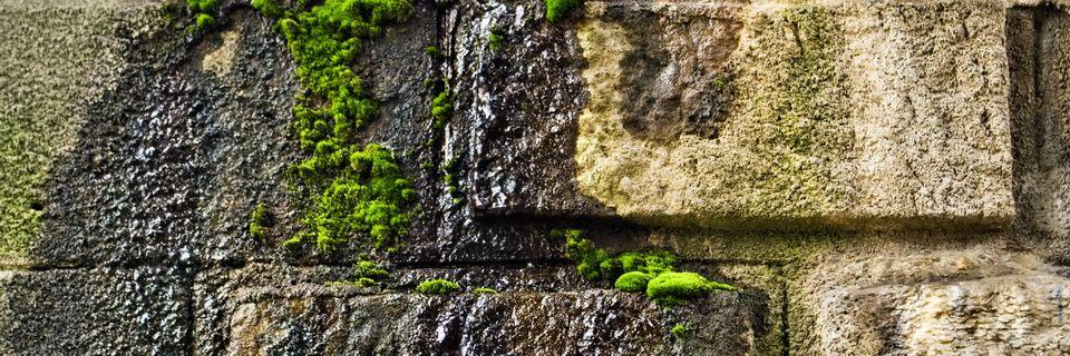 Schimmel- en mosgroei op vochtige buitenmuren lossen voegwerk op en tasten gesteente waardoor te zijner tijd vochtproblemen in het gebouw zullen ontstaan.